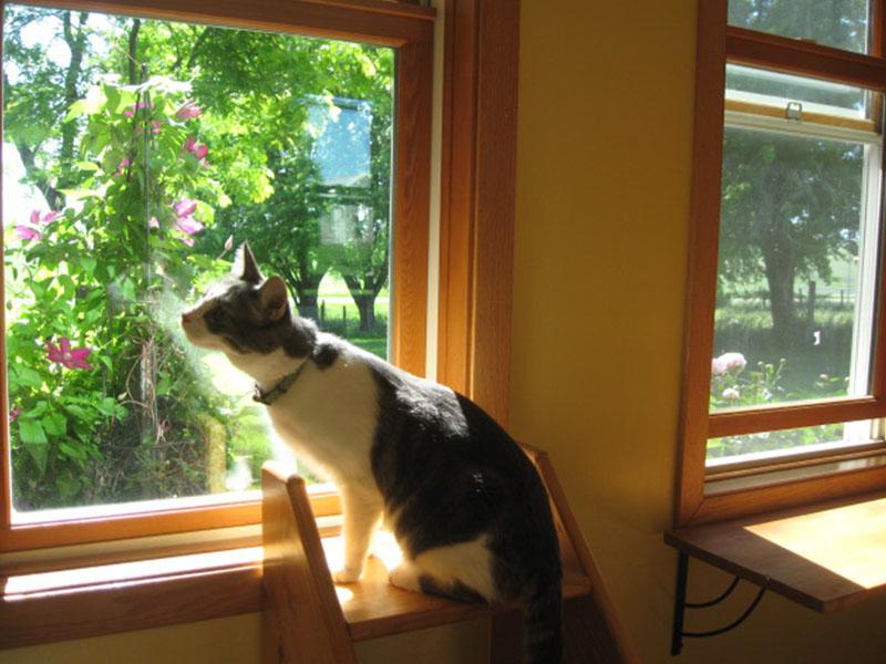 Cat's Cottage Inn